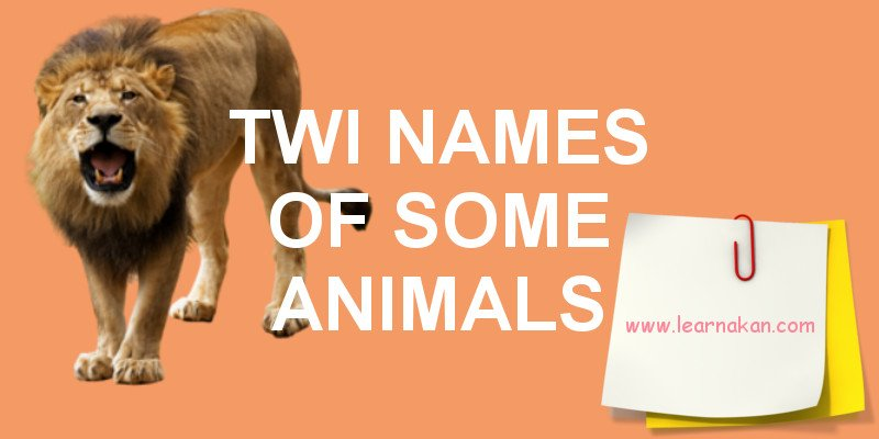 The Twi Names of Some Animals (Mmoa) | Learn Akan | Lesson 9